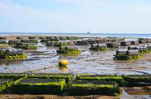marché aquaculture