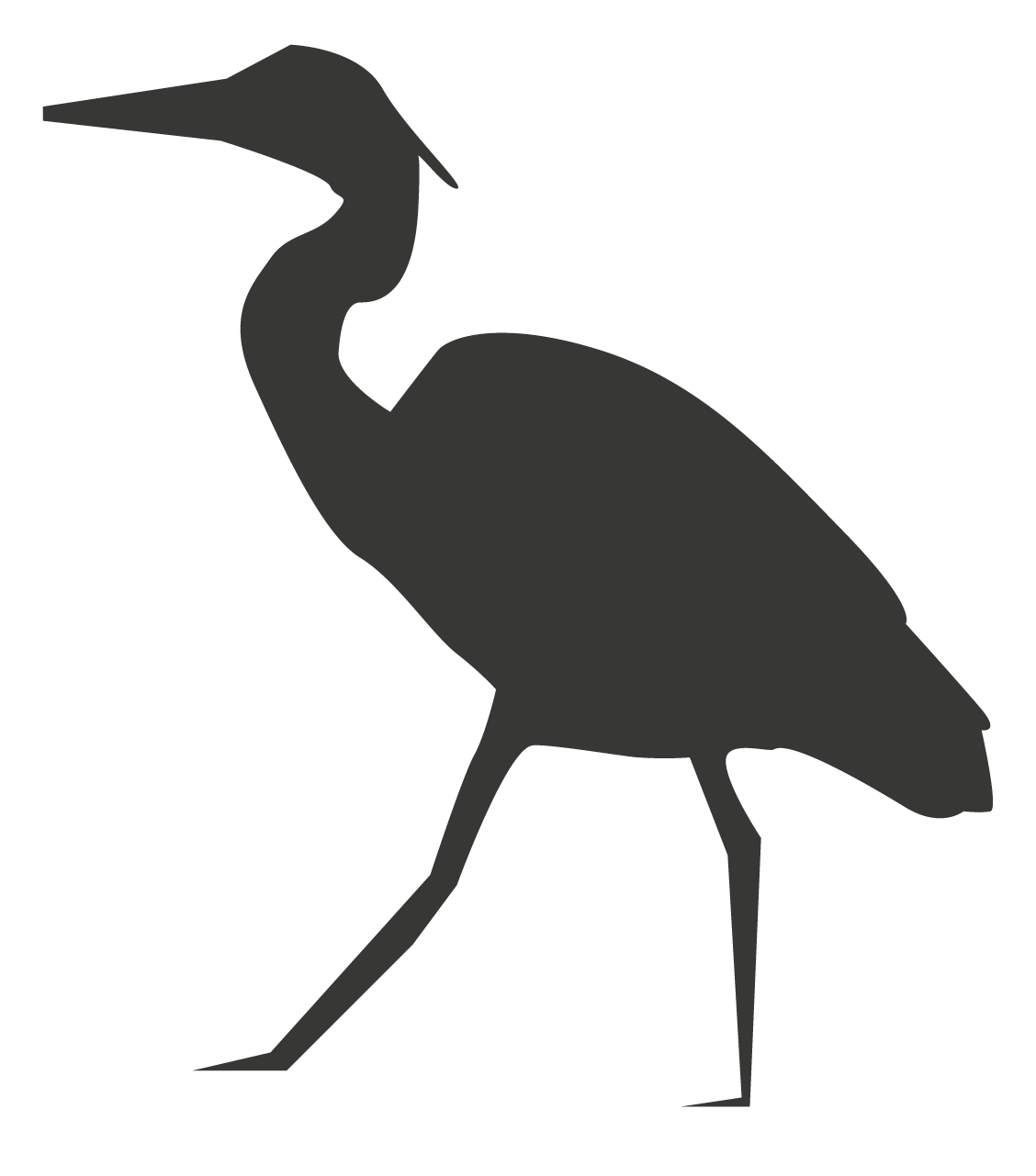 oiseaux grande taille