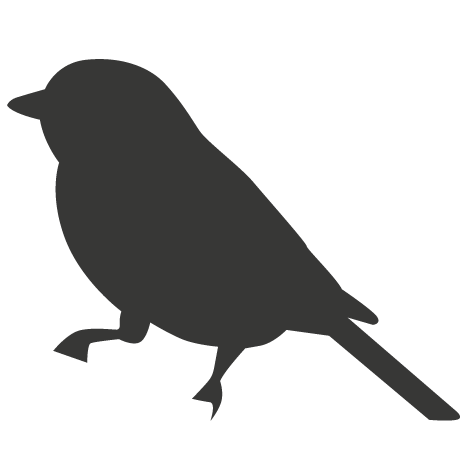 oiseaux petite taille
