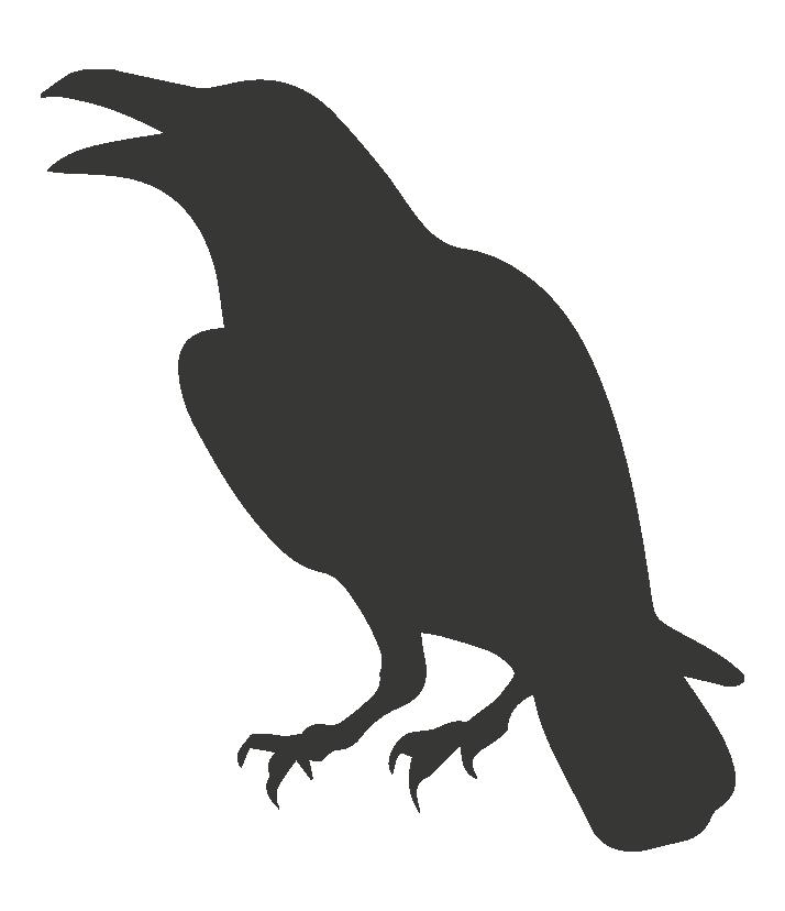 oiseaux taille moyenne